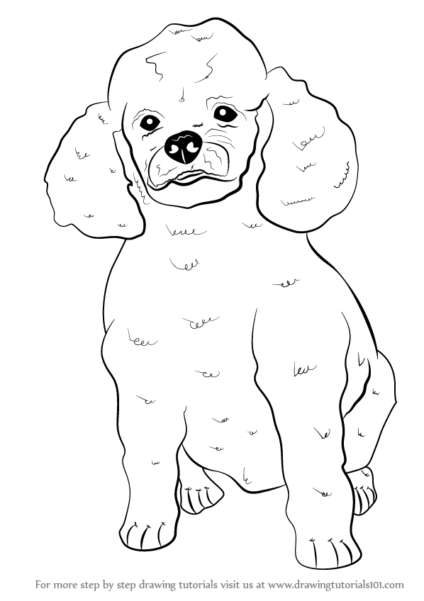 598x848 Poodle Dog Is An Elegant Amp Clever Animal. People Like To Keep Them