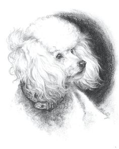 236x296 Coco Chanel The Poodle Dog, Original Drawing By Andy Shaw