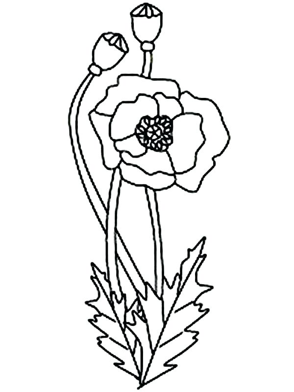 600x801 Poppy Coloring Page Poppies In Fields Colouring Sheet Poppy Cat