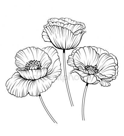 411x450 Poppy Stock Vectors, Royalty Free Poppy Illustrations