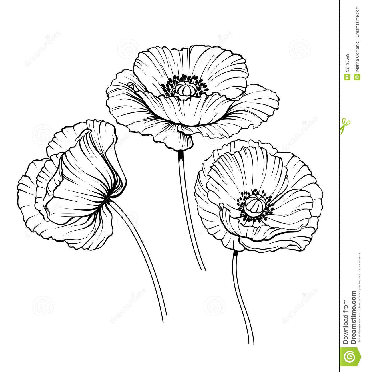 Poppy Drawing At Getdrawings Free For Personal Use Poppy