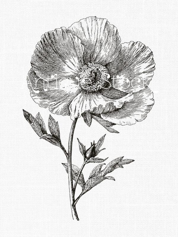 600x800 Flower Line Art Drawing