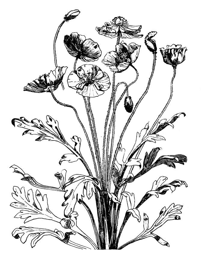 669x886 Flower Sketches