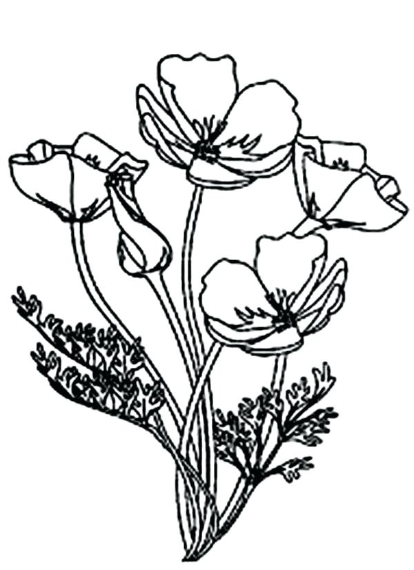 600x826 Poppy Coloring Page Poppy Picture Of Blooming Poppy Colouring Page