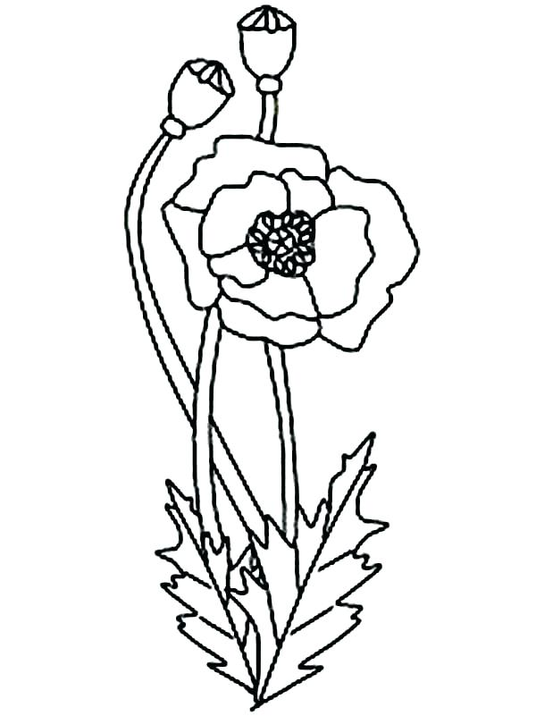 600x801 Poppy Coloring Sheet 95 In Addition To Poppy Coloring Page Poppy