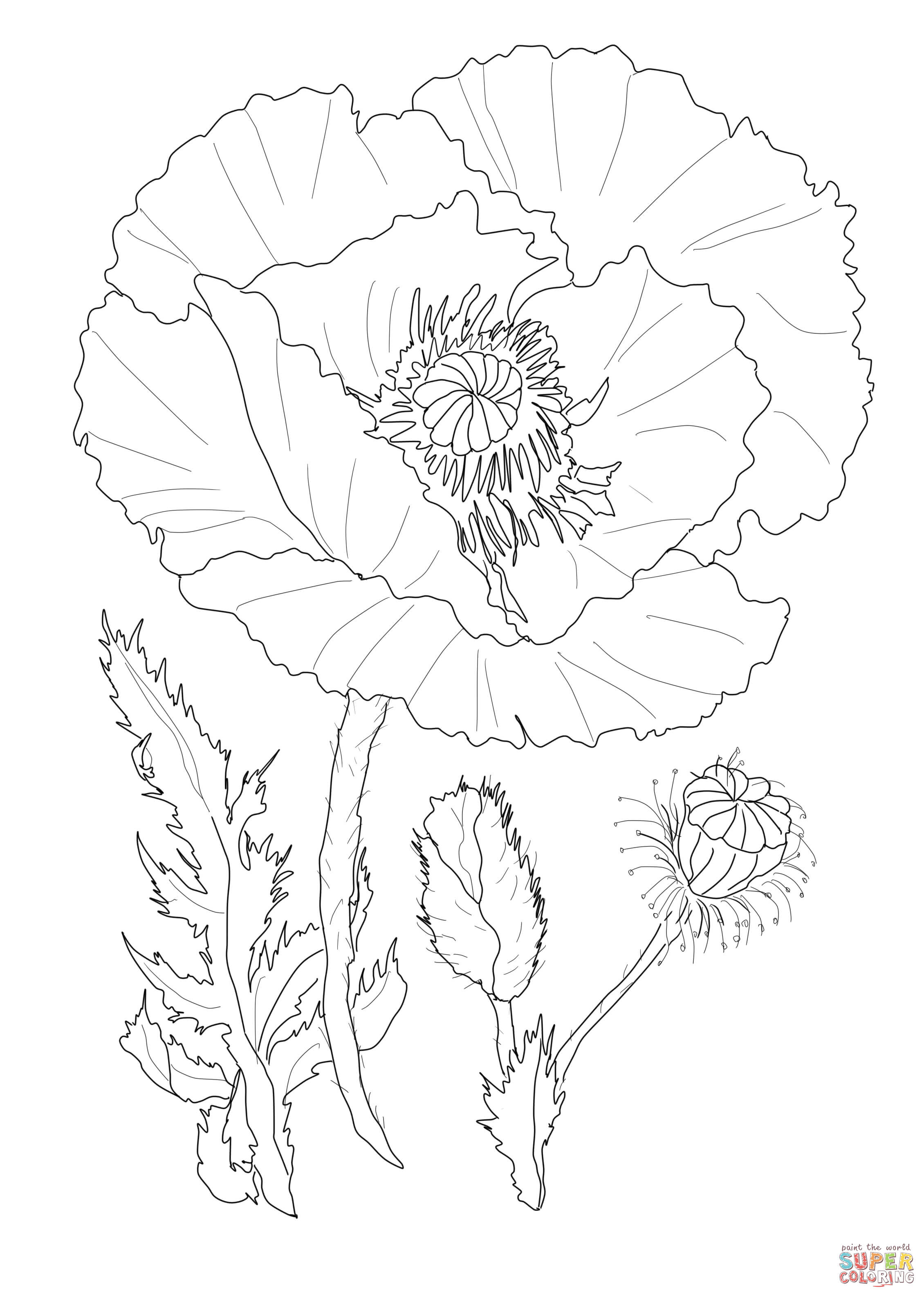 2260x3168 Poppy Flower Coloring Page Free Printable Coloring Pages