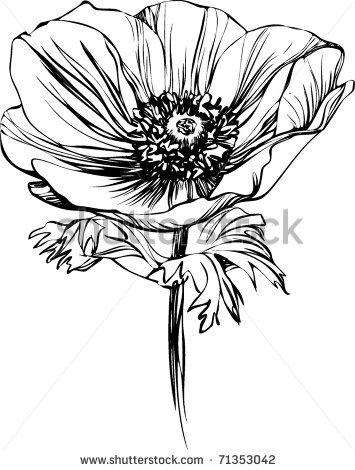 355x470 Poppy Flower On The Stalk By Artex67, Via Shutterstock Flower