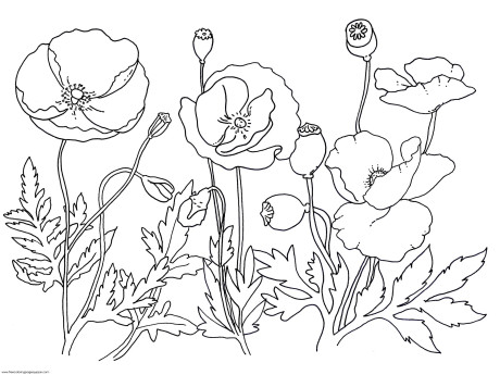 460x345 Drawn Poppy Flower Leaves