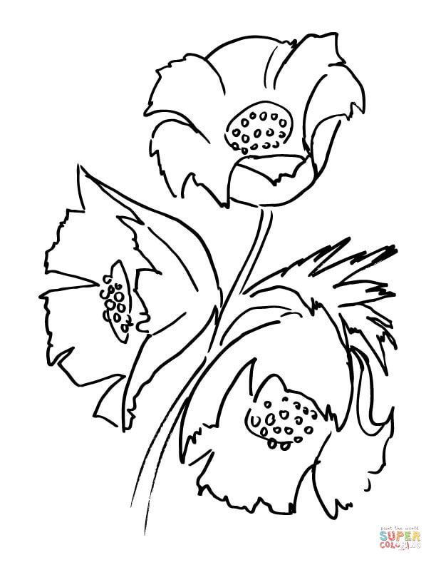 612x792 Poppy Flower Coloring Page Free Printable Coloring Pages