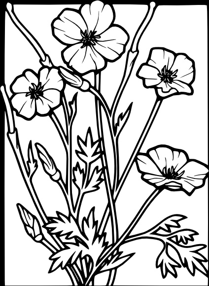 424x580 Poppy Free Vector Download (48 Free Vector) For Commercial Use