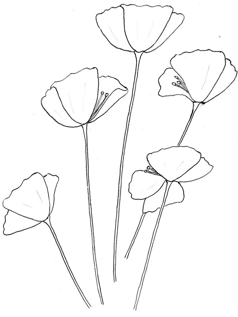 767x1024 California Poppy Colouring Template For Kids (And Big