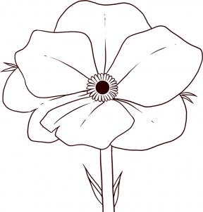 288x302 How To Draw Poppy How To Draw Doodles, Flowers
