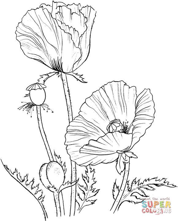 581x720 Oriental Poppy Coloring Page Scrapbook
