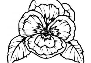 300x210 Poppy Flower Drawing Drawn Poppy Black And White