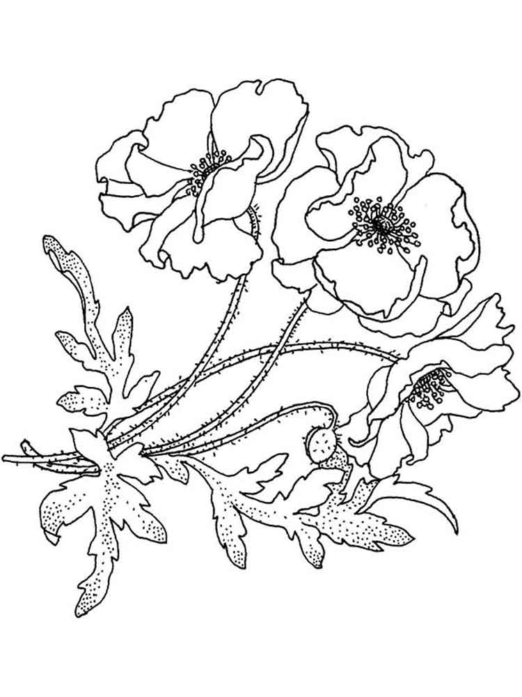 750x1000 Poppy Flower Coloring Pages. Download And Print Poppy Flower