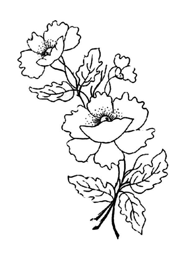 600x848 Remembrance Day Poppy Coloring Page 335838