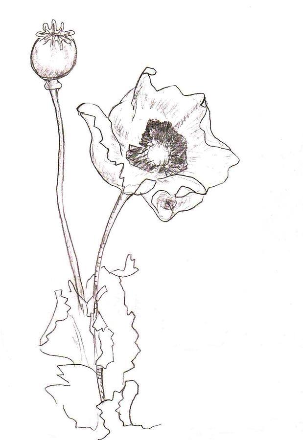 619x900 Draw Poppies Poppy Clip Art Poppy Line Drawing Poppy Flower