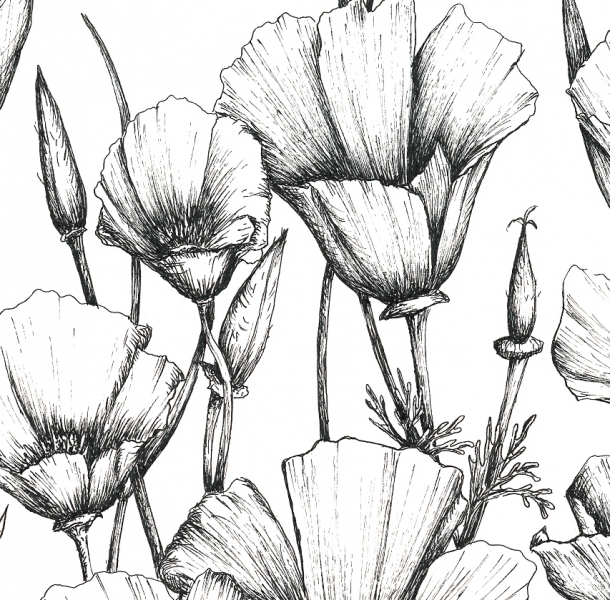 610x600 California Poppy Drawing Artwork Drawing Poppy