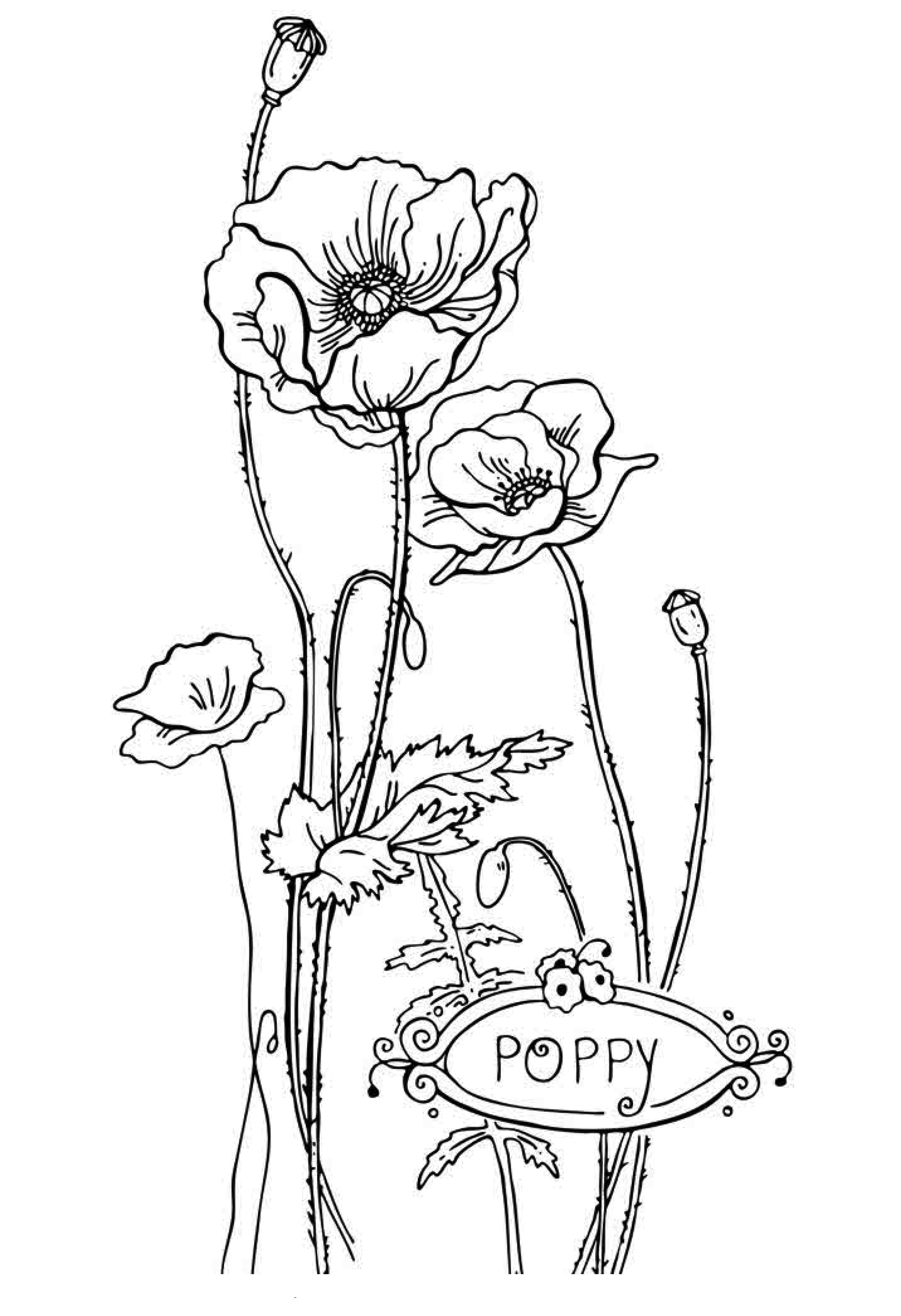2236x3266 Free Printable Flower Coloring Pages For Kids