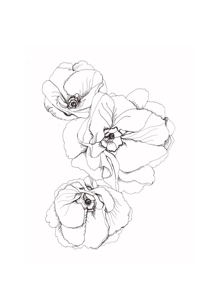 736x1041 Petunia Clipart Line Drawing Flower