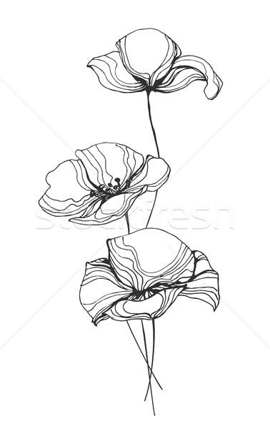 378x600 Poppies Flowers Line Art Vector Illustration Vector Illustration
