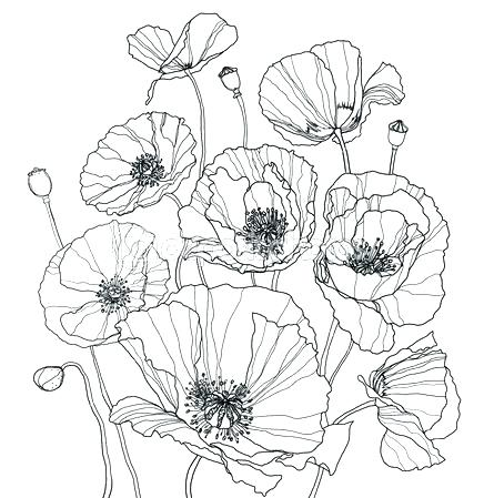 445x449 Poppy Coloring Page Adult Poppy Coloring Page Printable Pages