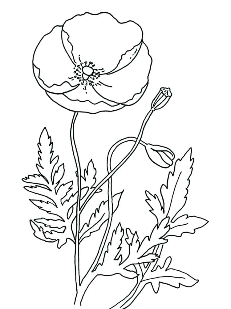 750x1000 Poppy Coloring Page Poppy Flower Coloring Pages Poppy Coloring