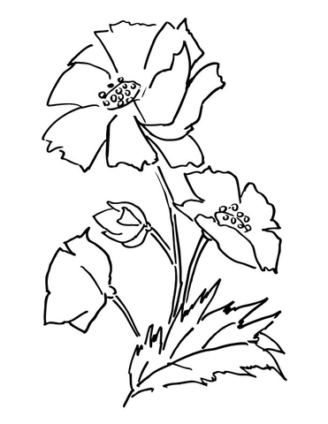 371x480 Poppy Flower Coloring Page Free Printable Coloring Pages