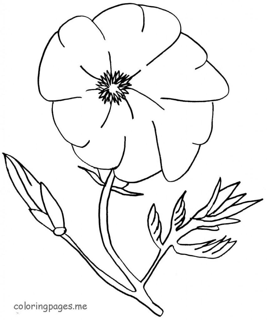 854x1024 Poppy Flowers Coloring Pages Download And Print For Free