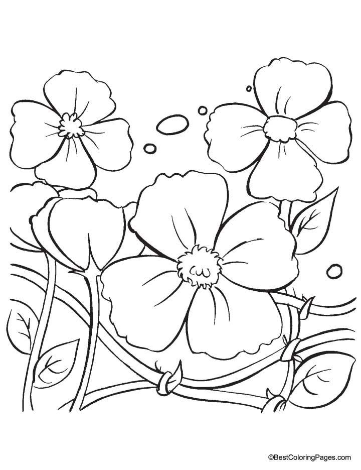 Poppy Flowers Drawing At Getdrawings Com Free For Personal Use