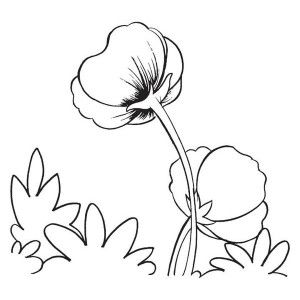 300x300 8 Best Places To Look Images On Poppy Drawing, Poppies