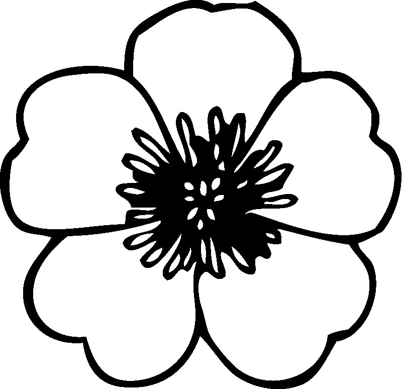 Elegant Poppy Flower Coloring Pages