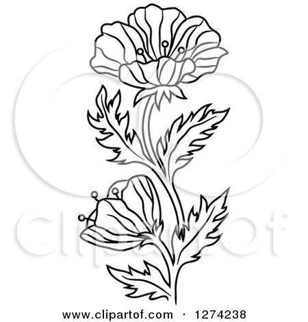 450x470 Clipart Of A Black And White Poppy Flower
