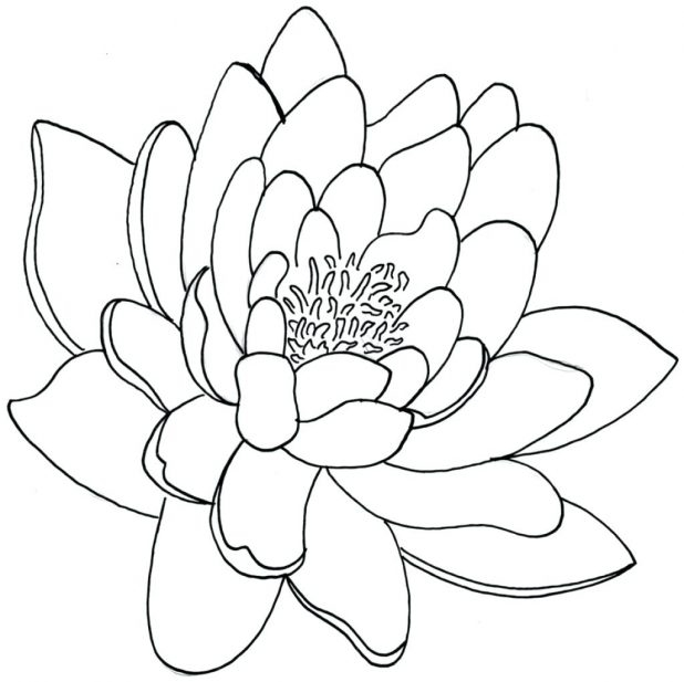 618x617 Lotus Flower Drawings For Tattoos Lily Flower Drawing Outline