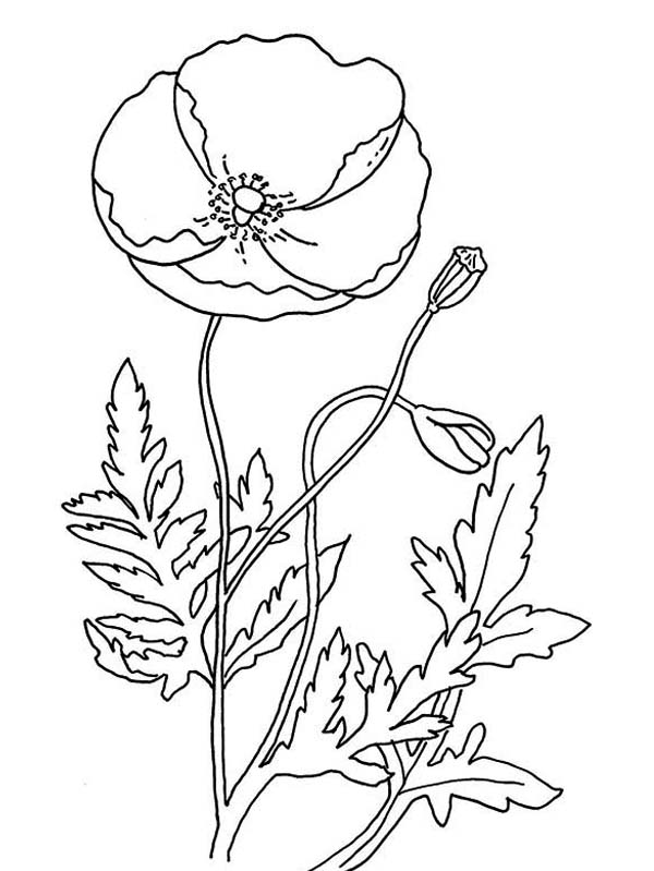 600x799 Remembrance Day Poppy Coloring Page