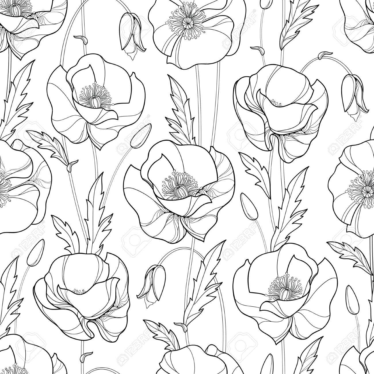 1300x1300 Seamless Pattern With Outline Poppy Flower, Bud And Leaves