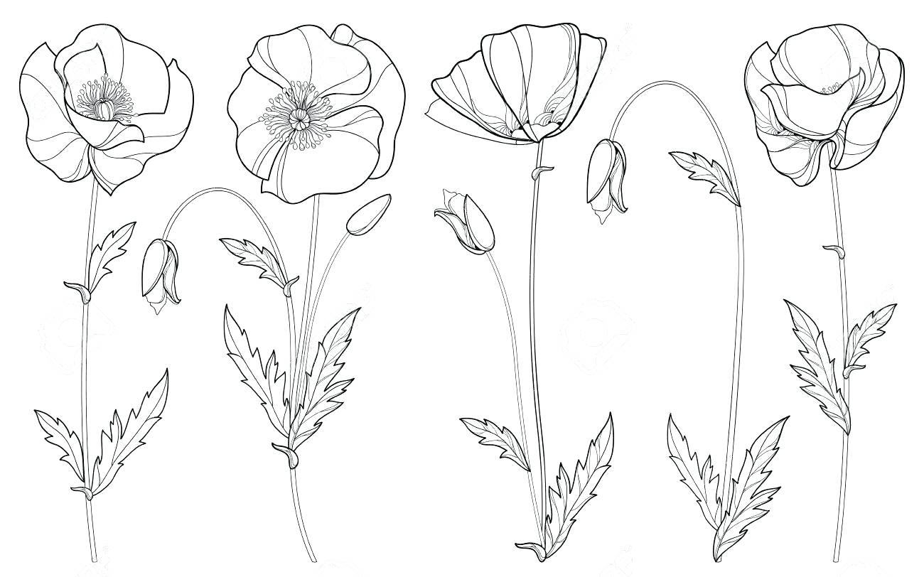 1300x812 Coloring Remembrance Day Coloring Veterans Printable Pages Poppy