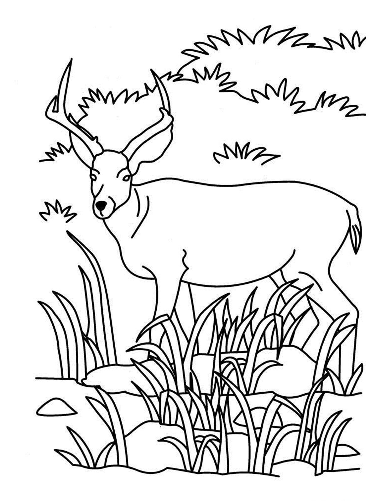 1200x1600 Antelope Animal Population Free Draw To Color