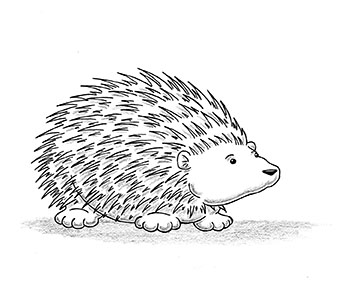 Porcupine Drawing