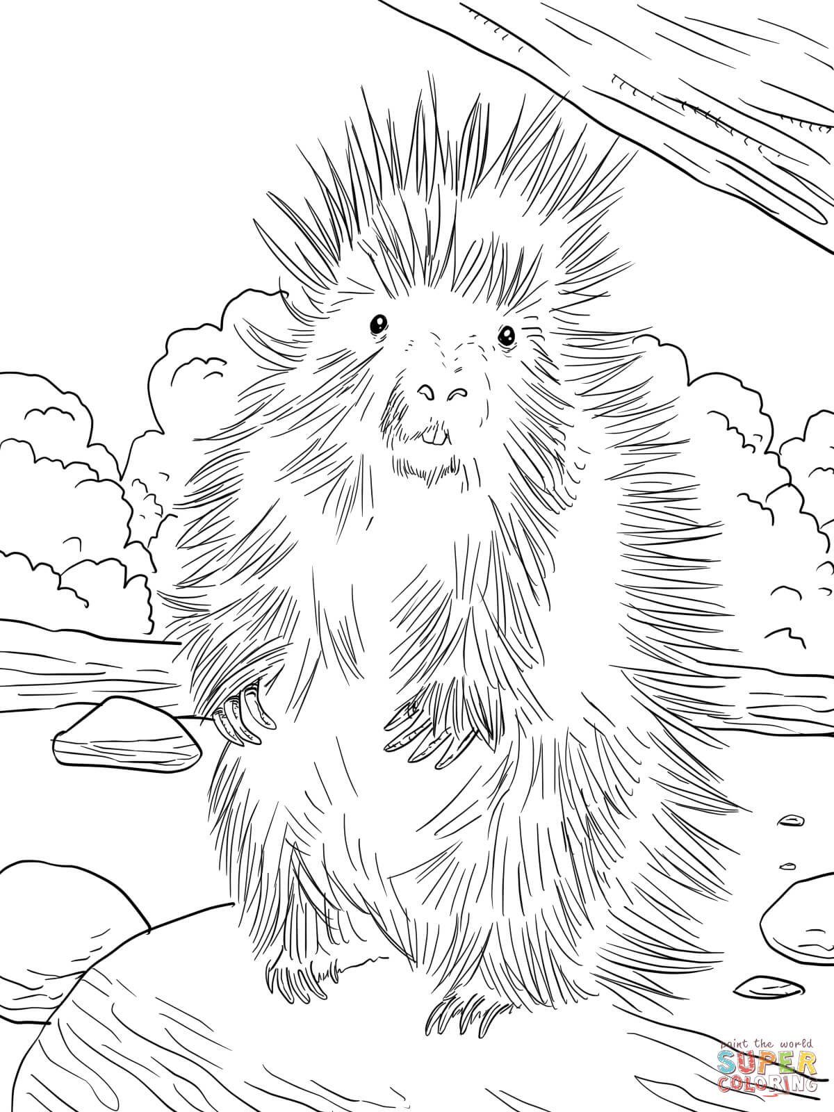 Porcupine Drawing at GetDrawings