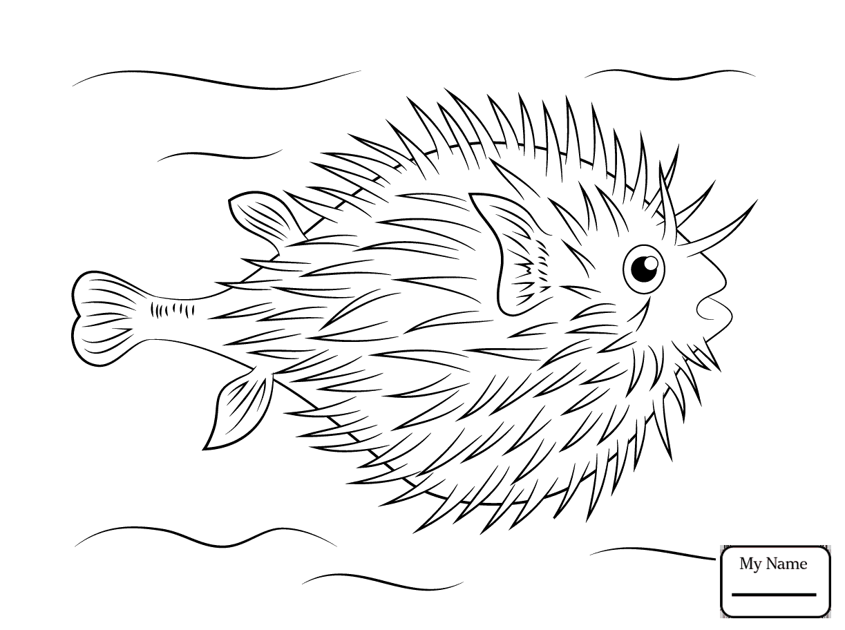 1223x912 Coloring Pages Puffer Fish Fish Porcupine Fish