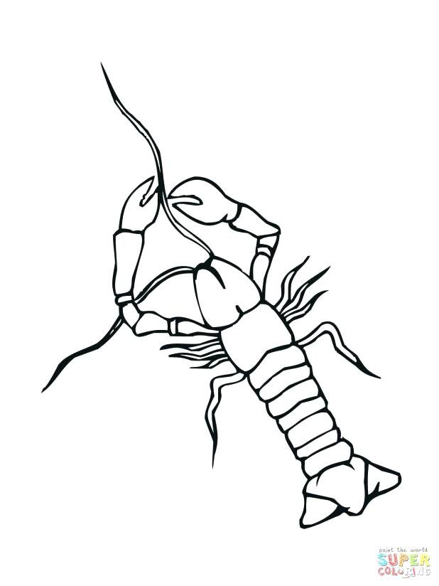 618x824 Coloring Page Crayfish Free Printable Pages Drawing Terrific