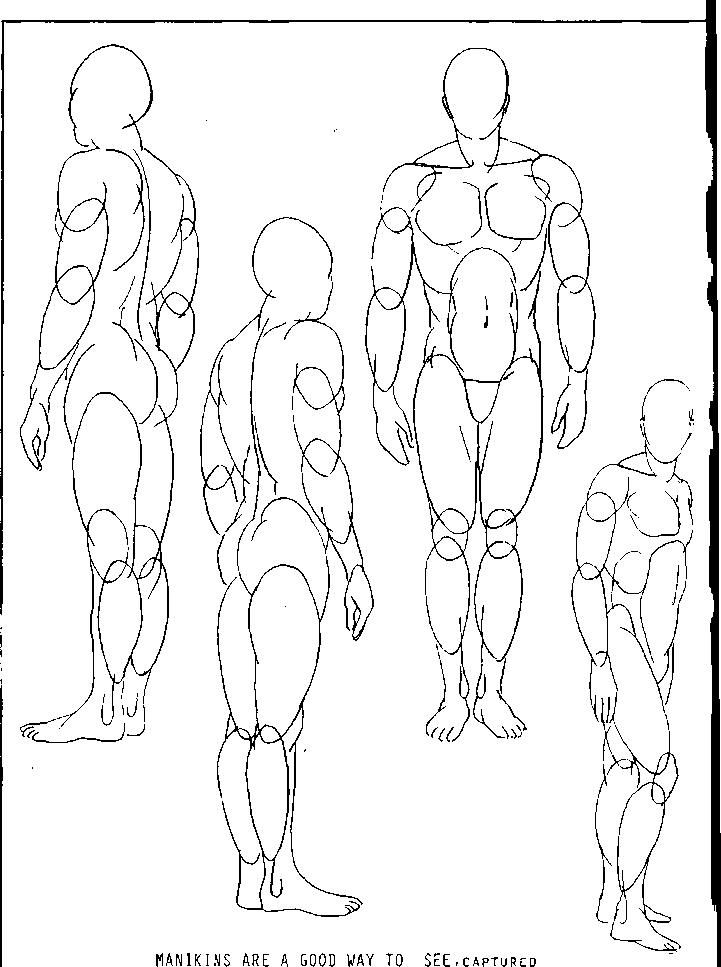 721x967 Good Understanding Of Anatomyis Essential