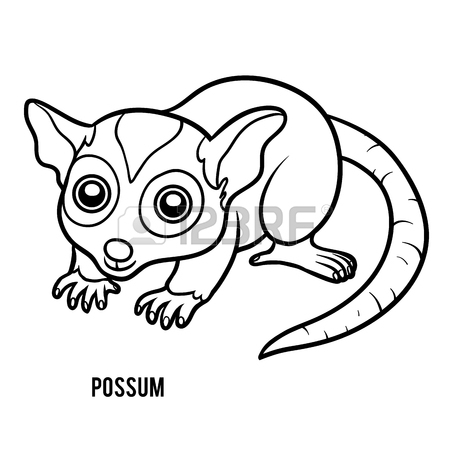 Possum Drawing