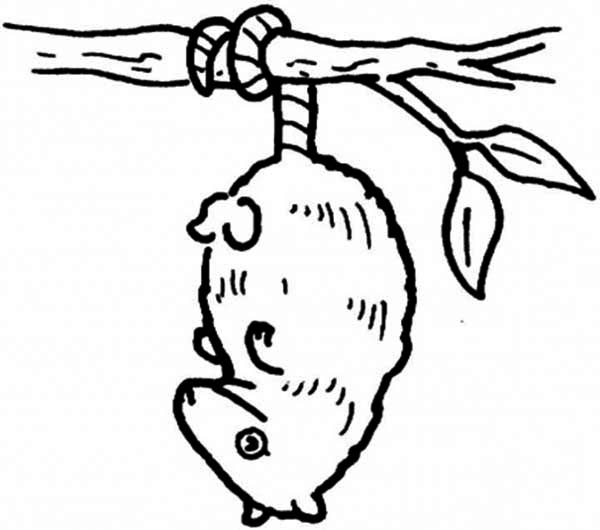 Possum Drawing at GetDrawings | Free download