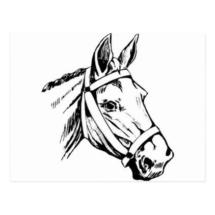 422x422 Horse Drawing Head Postcard