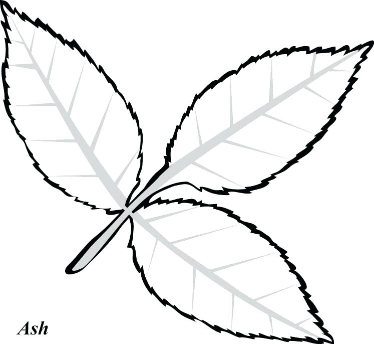 747x686 Free Pot Leaf Coloring Pages Printable Activity Shelter Best