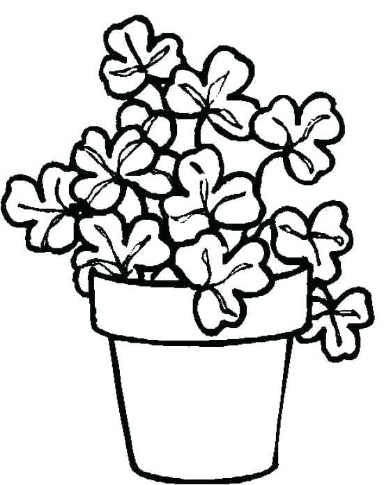 Pot Plant Drawing At Getdrawings Com Free For Personal Use Pot