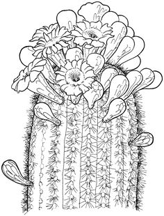 Potted Cactus Drawing At GetDrawings