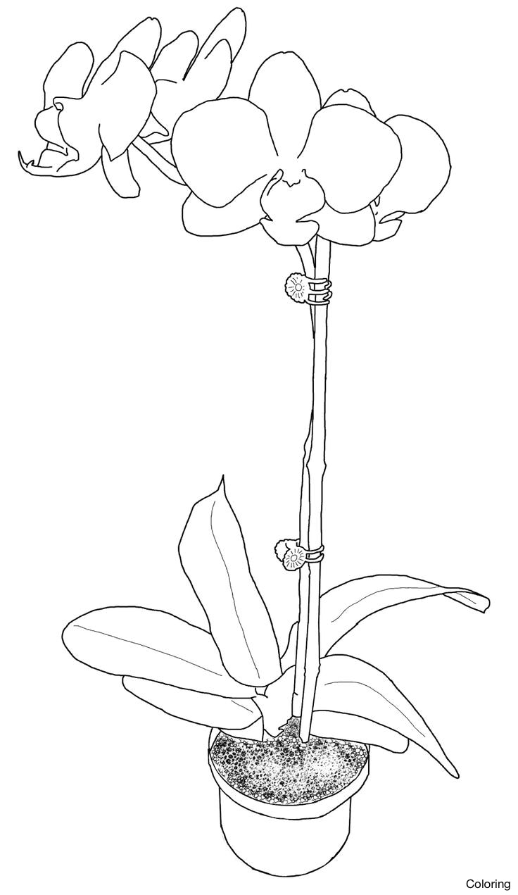 Potted Flower Drawing At Getdrawings Com Free For Personal Use